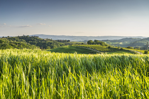 Tuscany「Landscape near Bacio」:スマホ壁紙(13)