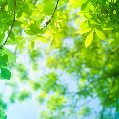 Nature「春ミヤマリーブズ」:スマホ壁紙(13)