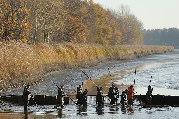 Carp「Fishermen Harvest Carp Ahead Of Christmas」:写真・画像(8)[壁紙.com]
