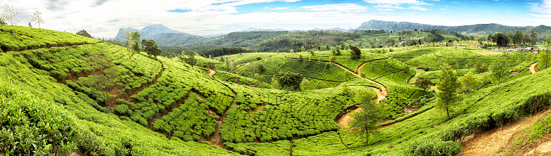 Sri Lanka「Tea Terraces of Sri Lanka」:スマホ壁紙(17)