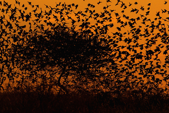 Botswana「An African Safari」:写真・画像(7)[壁紙.com]