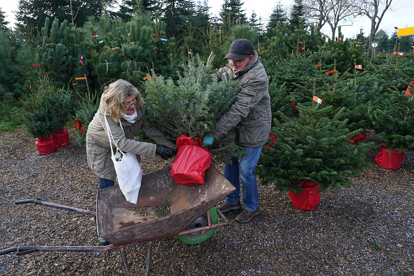 Tree「Christmas Tree Sales Begin In Germany During The Pandemic Second Wave」:写真・画像(0)[壁紙.com]