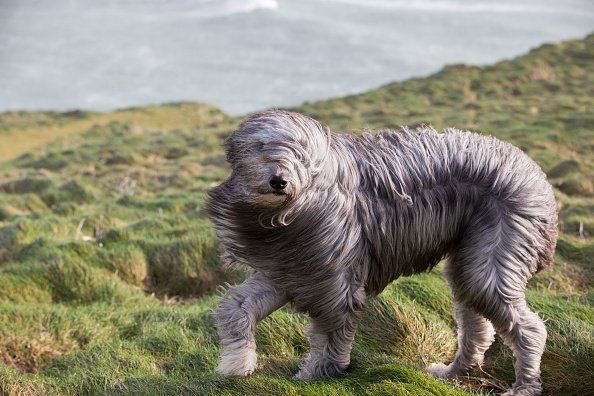 動物「Storm Imogen Sweeps The South Of England」:写真・画像(19)[壁紙.com]
