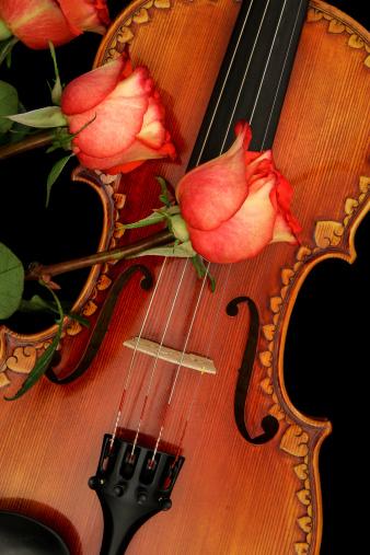 Violin「Violin & Roses」:スマホ壁紙(5)