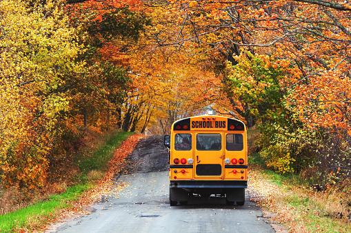 School Bus「School Bus」:スマホ壁紙(7)