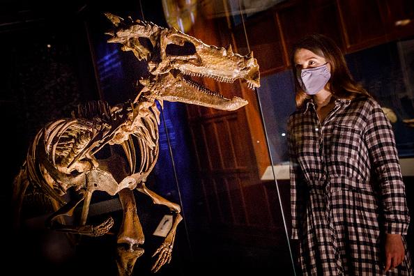 "Natural History Museum - London「""Fantastic Beasts The Wonder of Nature"" At The Natural History Museum - Photocall」:写真・画像(2)[壁紙.com]"