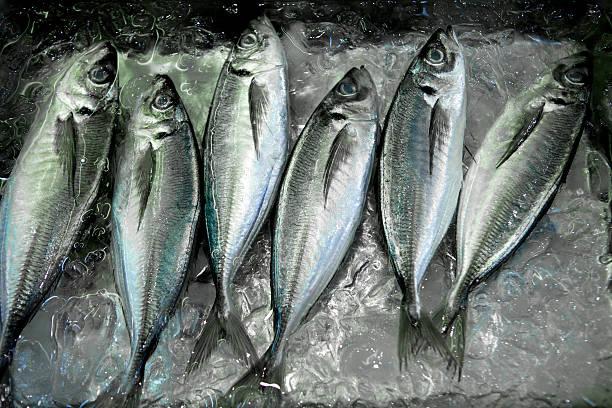 Fresh  Mackerel at Tsukiji Market:スマホ壁紙(壁紙.com)