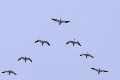 Flock Of Birds「Leadership」:スマホ壁紙(17)