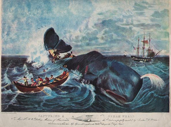 Ship「Capturing A Sperm Whale」:写真・画像(15)[壁紙.com]