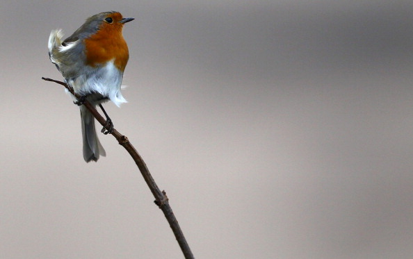 Bird「More Stormy Weather Due To Hit UK Today」:写真・画像(1)[壁紙.com]