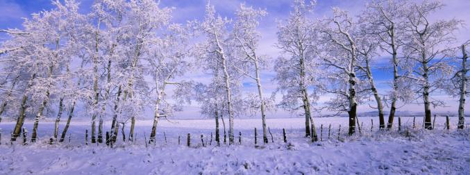 January「Panoramic Winter Scenic」:スマホ壁紙(17)