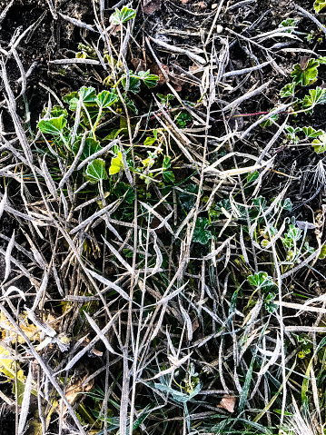 Run Over「Close view of a flattened crop field of dried rapeseed」:スマホ壁紙(14)