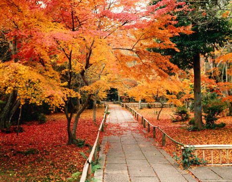 紅葉「Autumn in Kyoto」:スマホ壁紙(11)