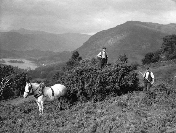 Tranquil Scene「Bracken Harvest」:写真・画像(19)[壁紙.com]