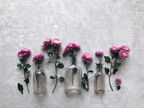 Chrysanthemum「Pink chrysanthemum flowers and glass bottle vases」:スマホ壁紙(7)