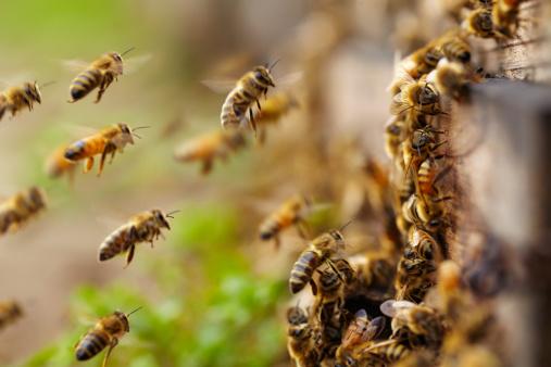 虫・昆虫「ハチミツビーズ飛ぶ」:スマホ壁紙(8)
