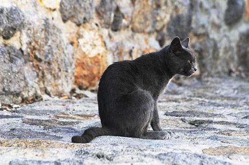 パトモス島「Grey wild cat resting」:スマホ壁紙(15)