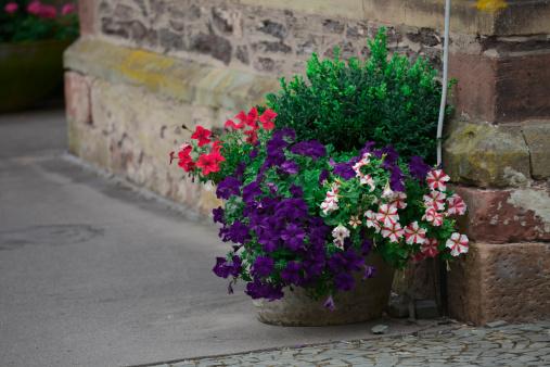 ペチュニア「Flowerpot」:スマホ壁紙(16)