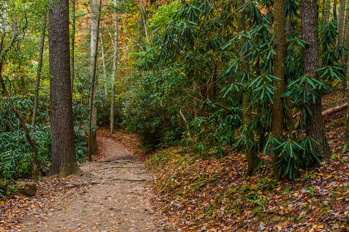 Great Smoky Mountains National Park「Autumn trail」:スマホ壁紙(9)
