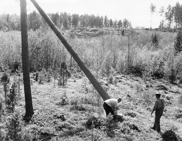 Cutting「Finnish Lumberjack」:写真・画像(19)[壁紙.com]
