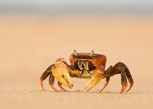 UNESCO「Ghost Crab On The Beach At Lamu Island」:スマホ壁紙(13)