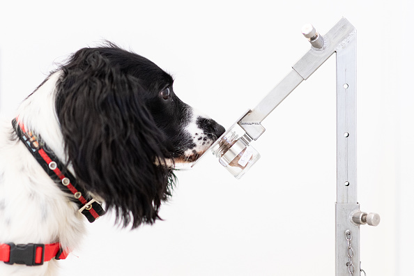 Topix「Medical Detection Dogs Are Being Re-trained To Help Identify Covid-19」:写真・画像(18)[壁紙.com]