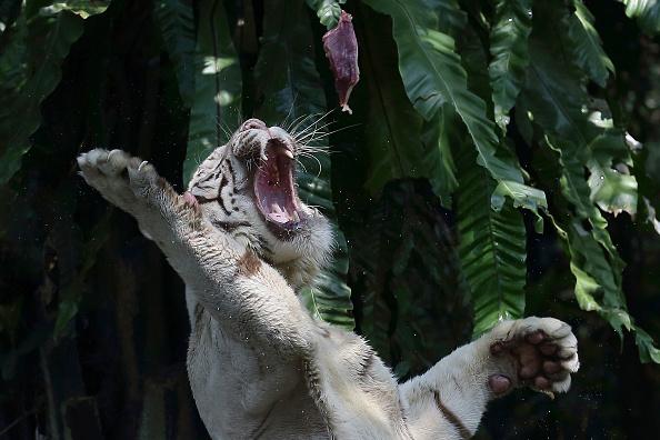 Raw Food「Singapore Zoo Celebrates Its' 40th Anniversary」:写真・画像(9)[壁紙.com]