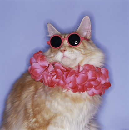 Cool Attitude「Cat with sunglasses and lei」:スマホ壁紙(2)