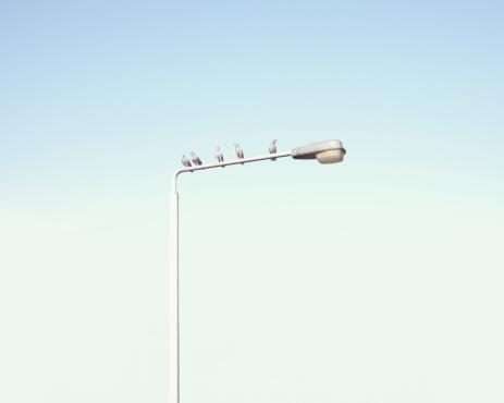 Waiting「Pigeons of a lamp post」:スマホ壁紙(5)