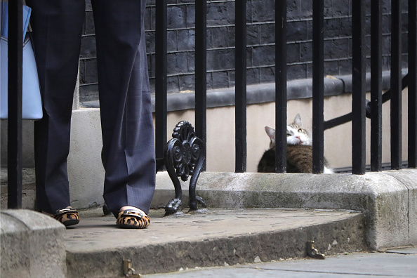 Famous Place「Ministers Attend David Cameron's Last Cabinet Meeting」:写真・画像(19)[壁紙.com]