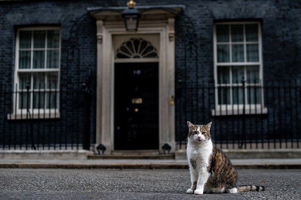 Domestic Cat「Ministers Attend Cabinet Amid Tory Leadership Race」:写真・画像(2)[壁紙.com]