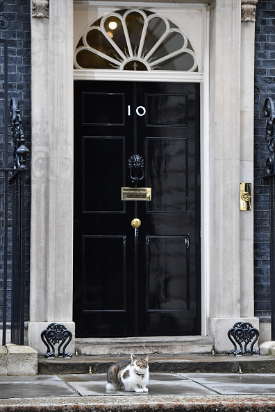 Tabby Cat「David Cameron Holds The First Cabinet Meeting Since The UK Voted To Leave The EU」:写真・画像(4)[壁紙.com]
