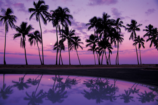 オアフ島「Palms at Sunset, Oahu, Hawaiian Islands」:スマホ壁紙(10)