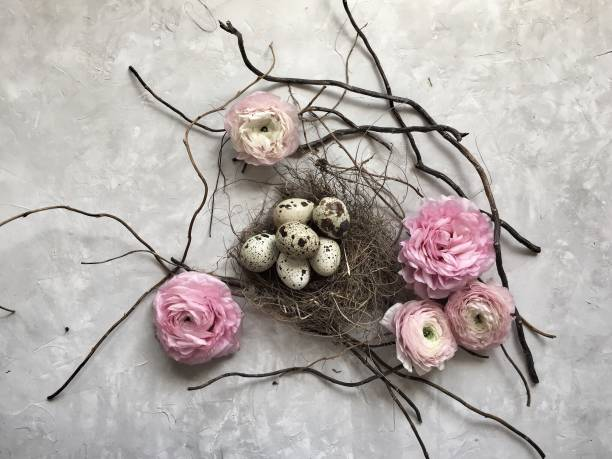 Quail eggs in a birds nest with ranunculi  flowers:スマホ壁紙(壁紙.com)