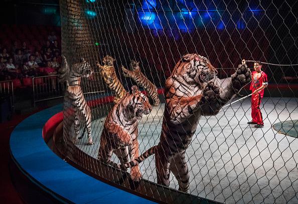 Wilderness Area「China's Siberian Tiger Farm」:写真・画像(9)[壁紙.com]