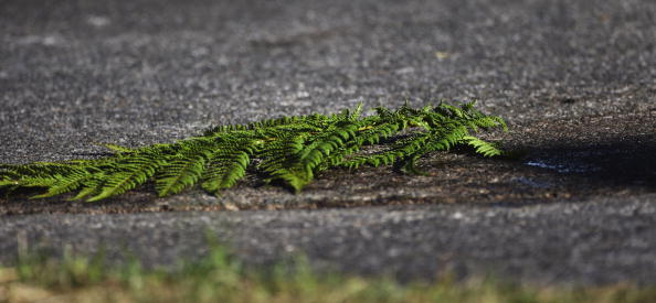 Frond「Memorial Held For British Tourist Killed In Taupo, New Zealand」:写真・画像(13)[壁紙.com]