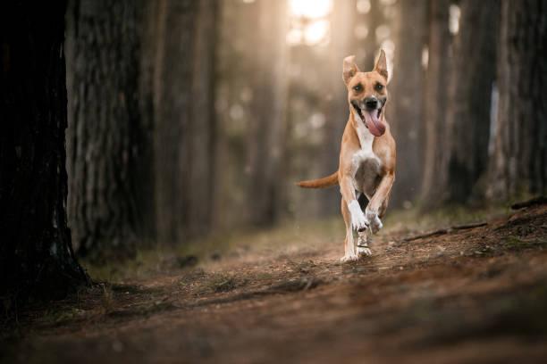 Dog running in the forest:スマホ壁紙(壁紙.com)
