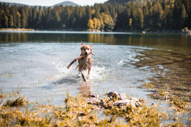 dog running on the lake:スマホ壁紙(壁紙.com)