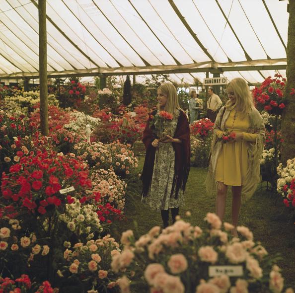 カーネーション「Chelsea Flower Show 1970」:写真・画像(0)[壁紙.com]