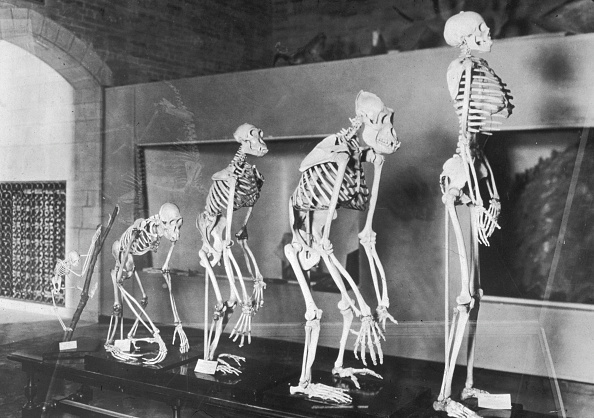 People「Human Evolution」:写真・画像(0)[壁紙.com]
