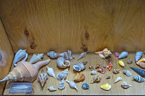 ナメクジ「display of elaborate exoskeleton shells」:スマホ壁紙(18)