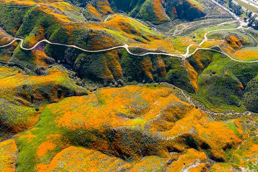 Dirt Road「Aerial Panorama of Poppy Blooms」:スマホ壁紙(15)