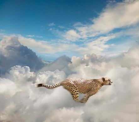Cloud Computing「Running Cheetah In The Cloud」:スマホ壁紙(9)