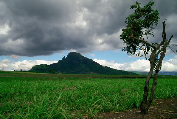 Overcast「Sugar Cane Crop, Mauritius」:写真・画像(15)[壁紙.com]