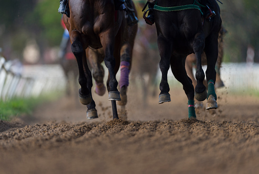 Horse「Horse racing detail, hooves on all weather track」:スマホ壁紙(5)