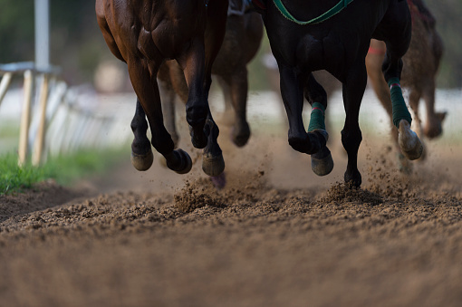 Horse「Horse Racing detail, hooves on all weather track」:スマホ壁紙(3)