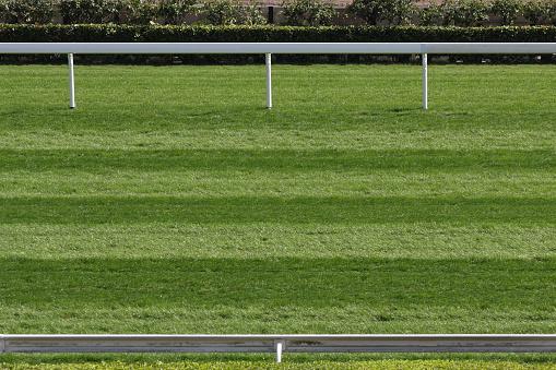 Horse「Horse Racing Track」:スマホ壁紙(13)