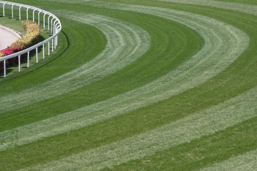Horse「Horse Racing Track」:スマホ壁紙(3)