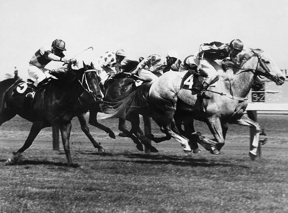Horse「Baghdad Note Wins Melbourne Cup」:写真・画像(2)[壁紙.com]