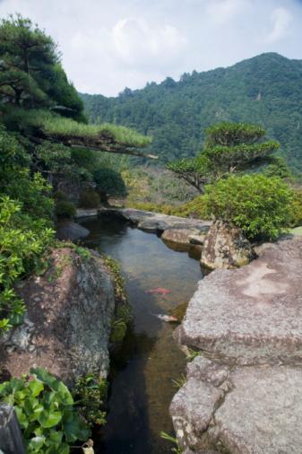 Carp「Japan, Wakayama, carp in pool」:スマホ壁紙(16)